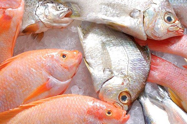 Pescado de calidad.